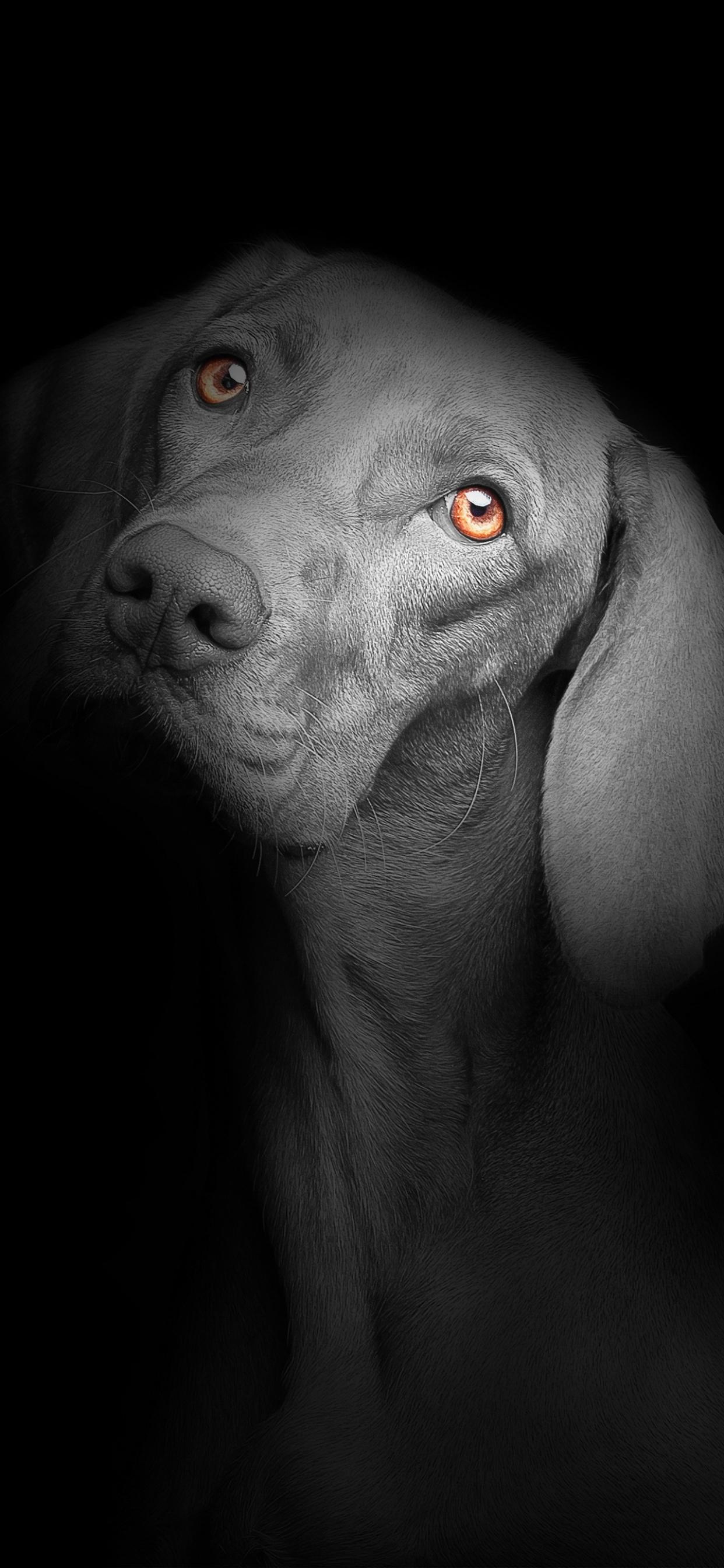 Black dog 4K Wallpaper, Black background, Dark, AMOLED ...