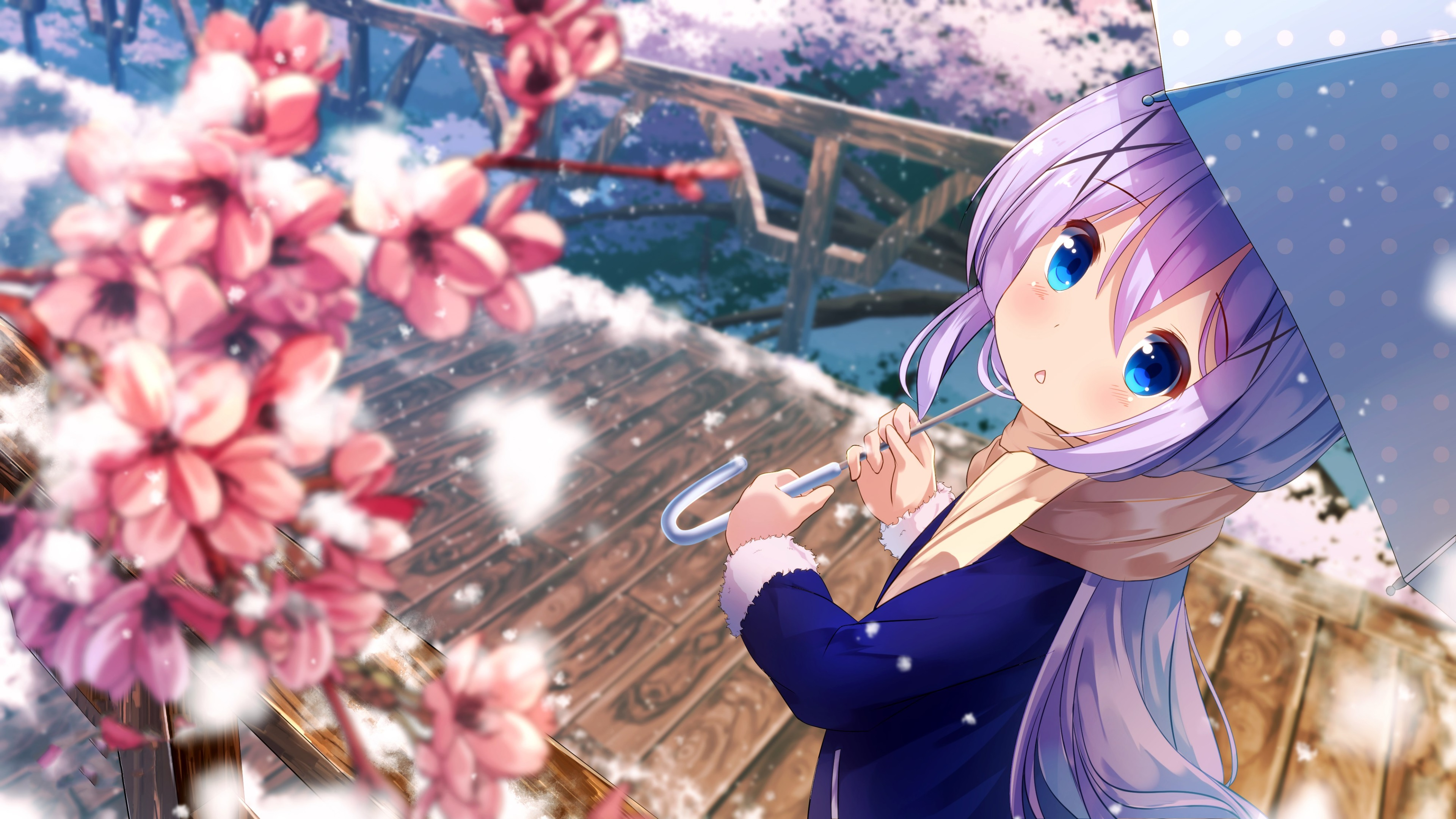 Chino Kafuu 4K Wallpaper, Anime girl, Cute, Spring ...