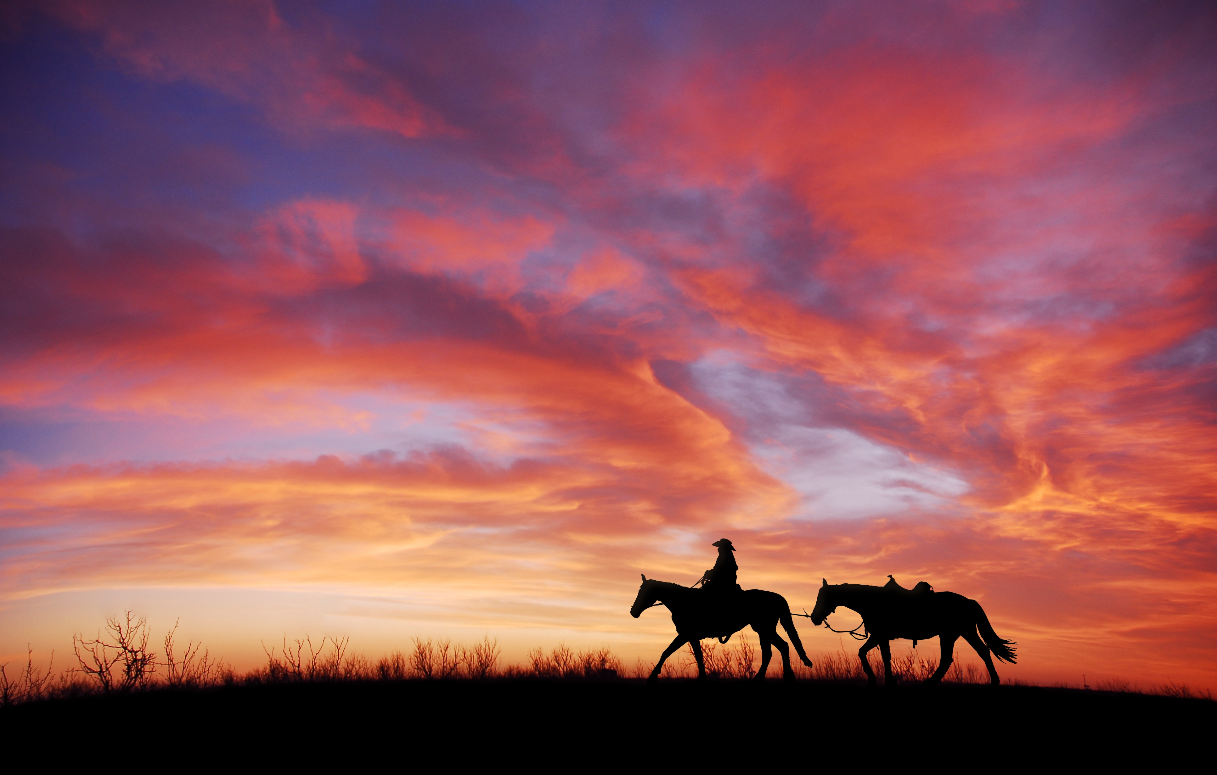 Cowboy 4k Wallpaper Horses Silhouette Dawn Sunset Photography 915