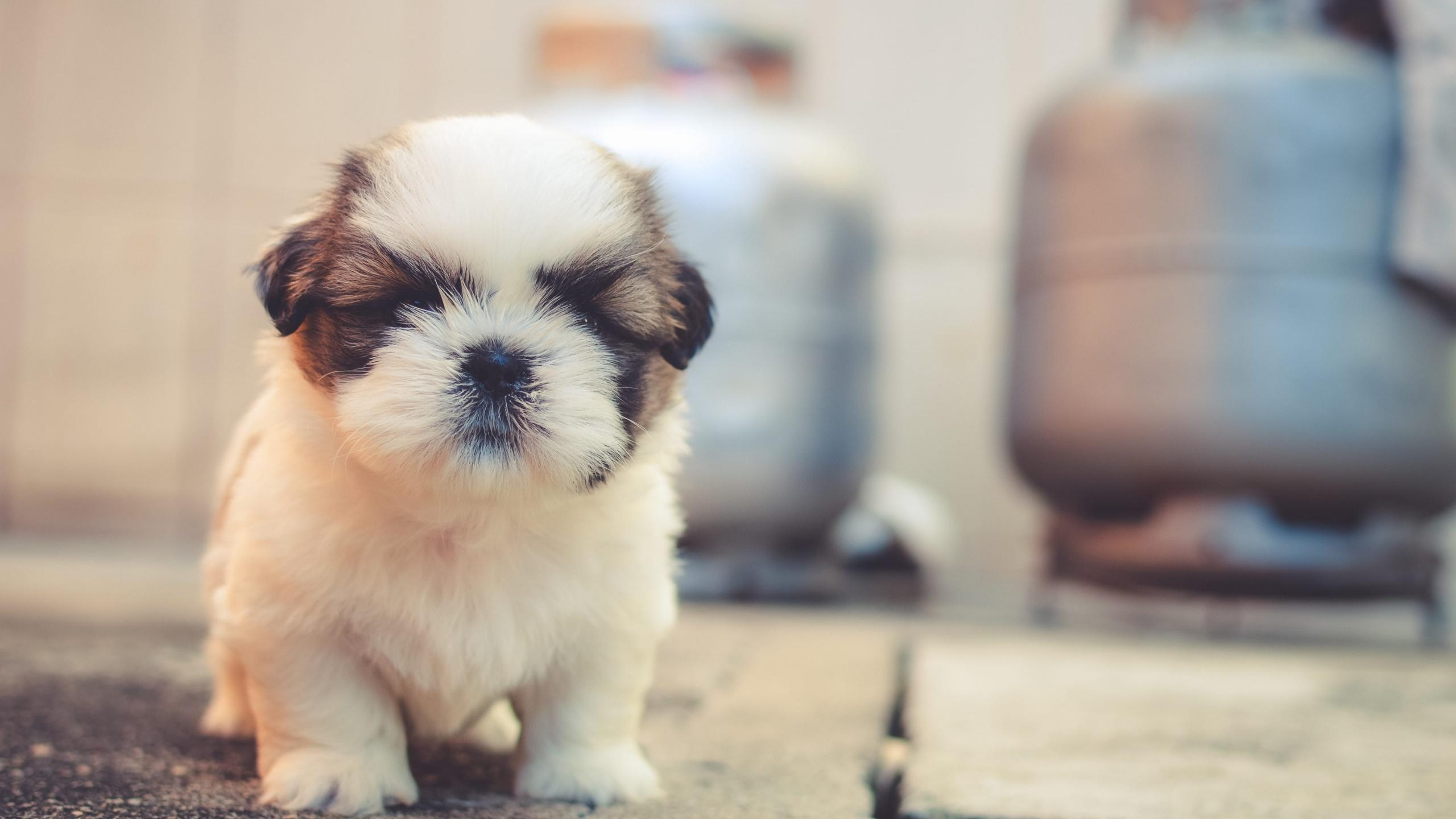 Cute Puppies 4k Wallpaper Saint Bernard Cute Dog Adorable Fluffy Dog Animals 1796