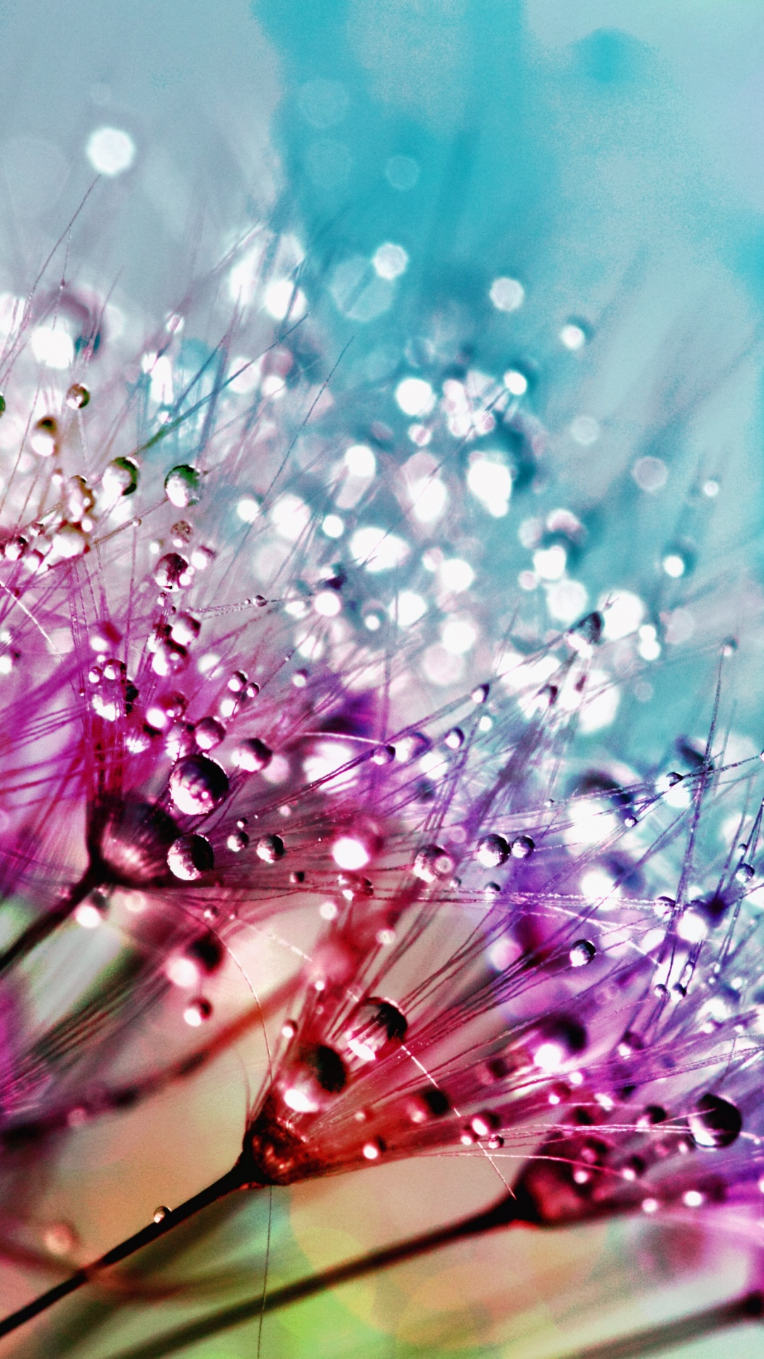 flowers dandelion water colorful faith drops desktop multicolor wallpapers 5k 2070 4k quotes pexels iphone psalms bible hope psalm 4kwallpapers