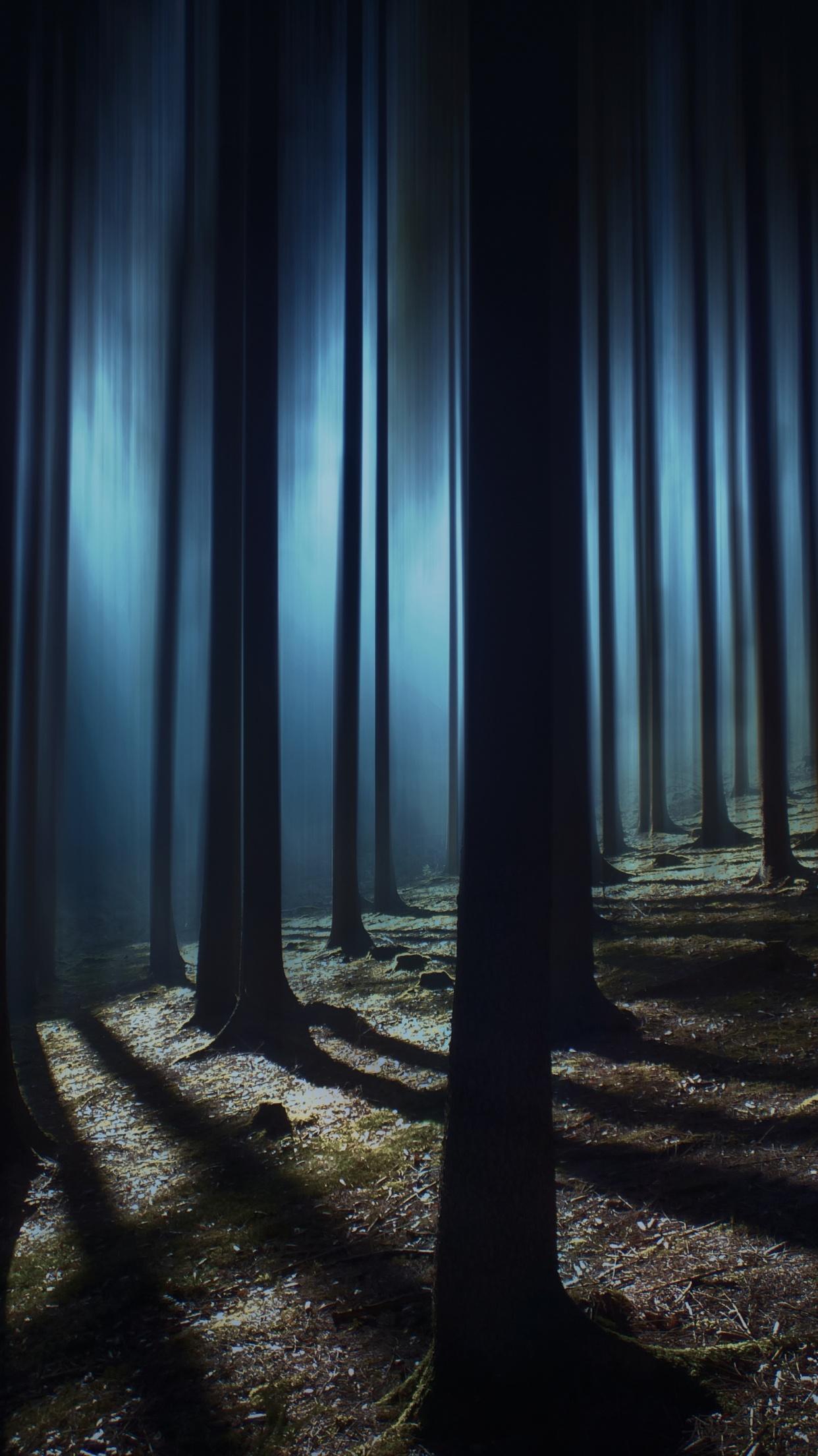 Dark Forest 4K Wallpaper, Woods, Night time, Dark, Shadow ...