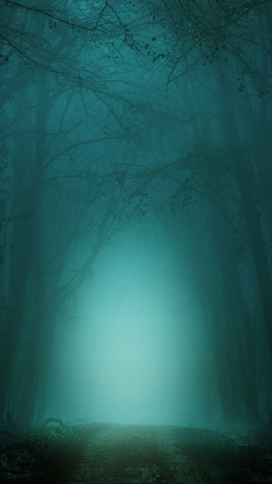 Forest 4k Wallpaper Path Foggy Morning Teal Cold Turquoise Trees 5k Nature 390