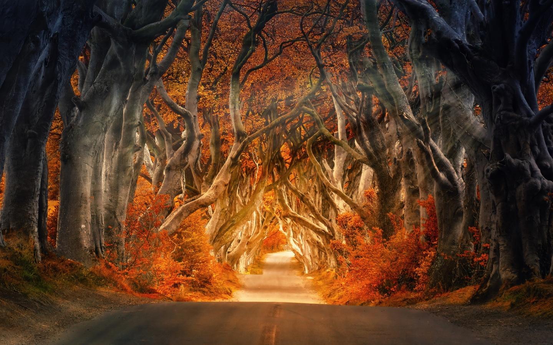 Forest 4k Wallpaper Road Daylight Autumn Fall Sunrays Trees 5k Nature 154