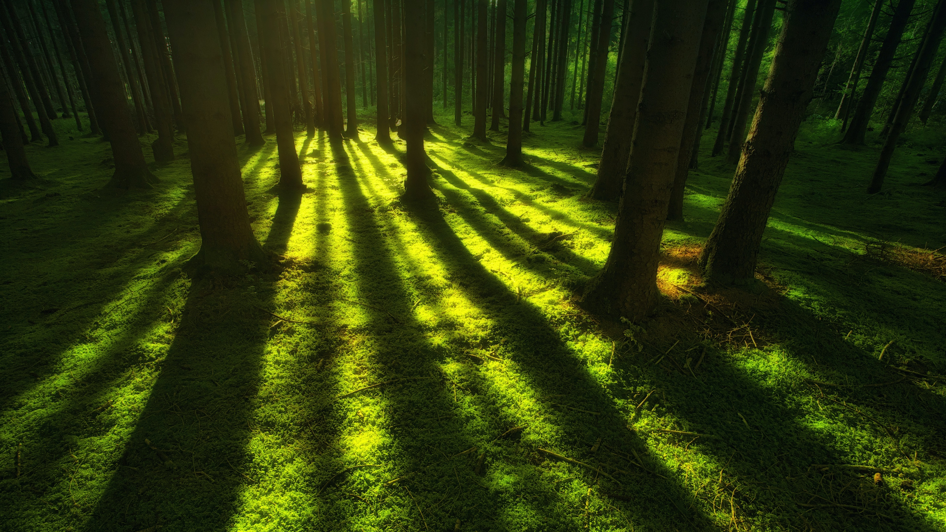 Forest 4k Wallpaper Trees Shadow Daylight Green Nature 535