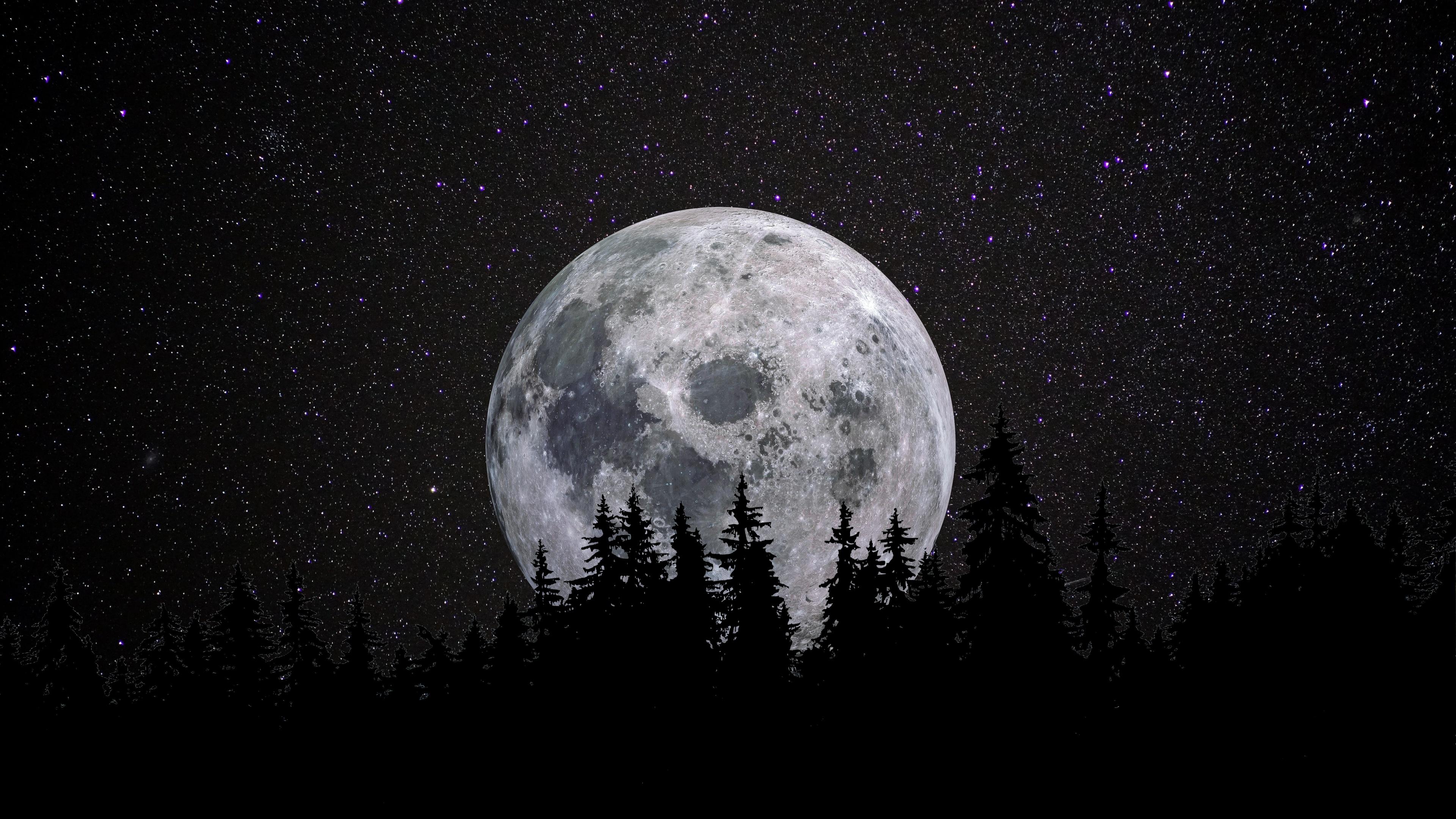 Full Moon 4k Wallpaper Forest Night Dark Starry Sky 5k 8k Nature 1684