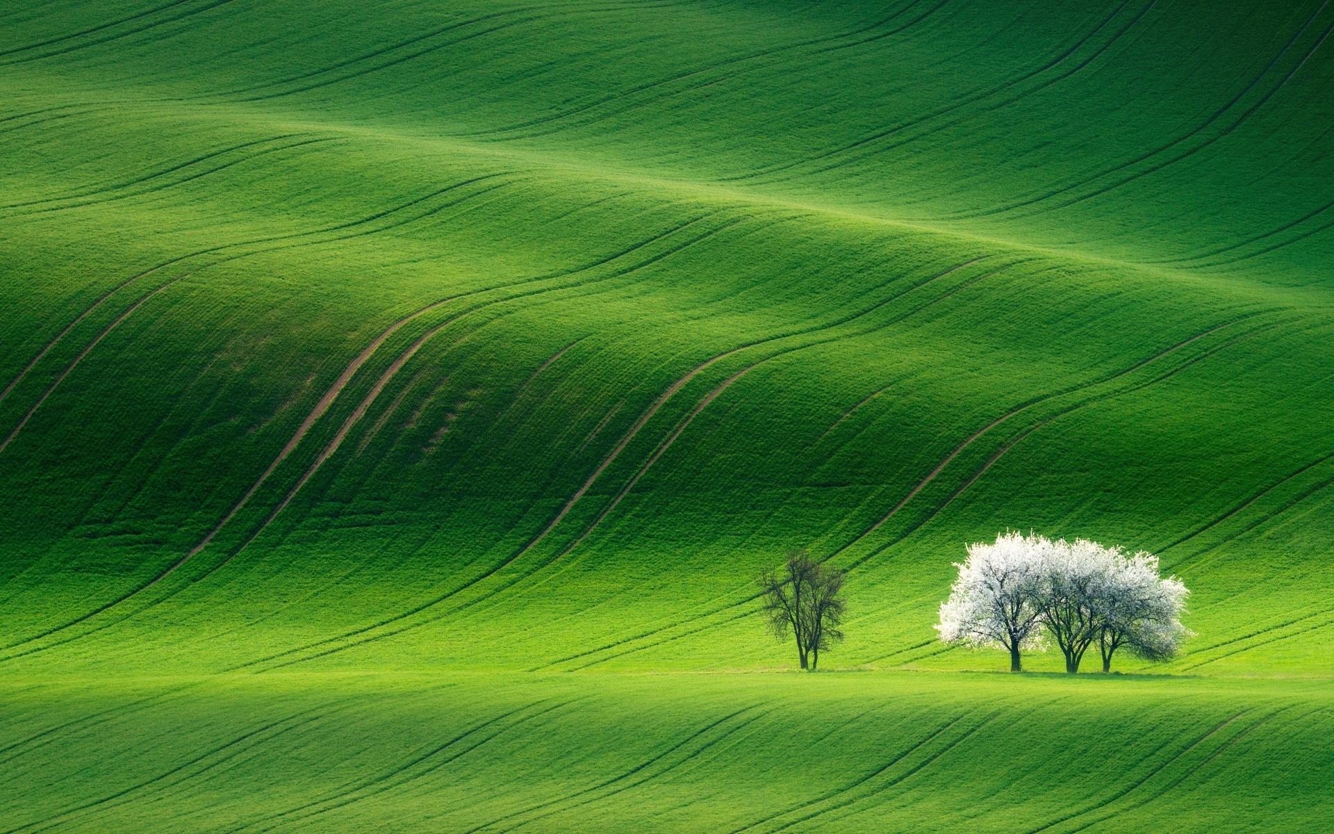 Grassland 4k Wallpaper Green Landscape Summer Stock Nature 1167
