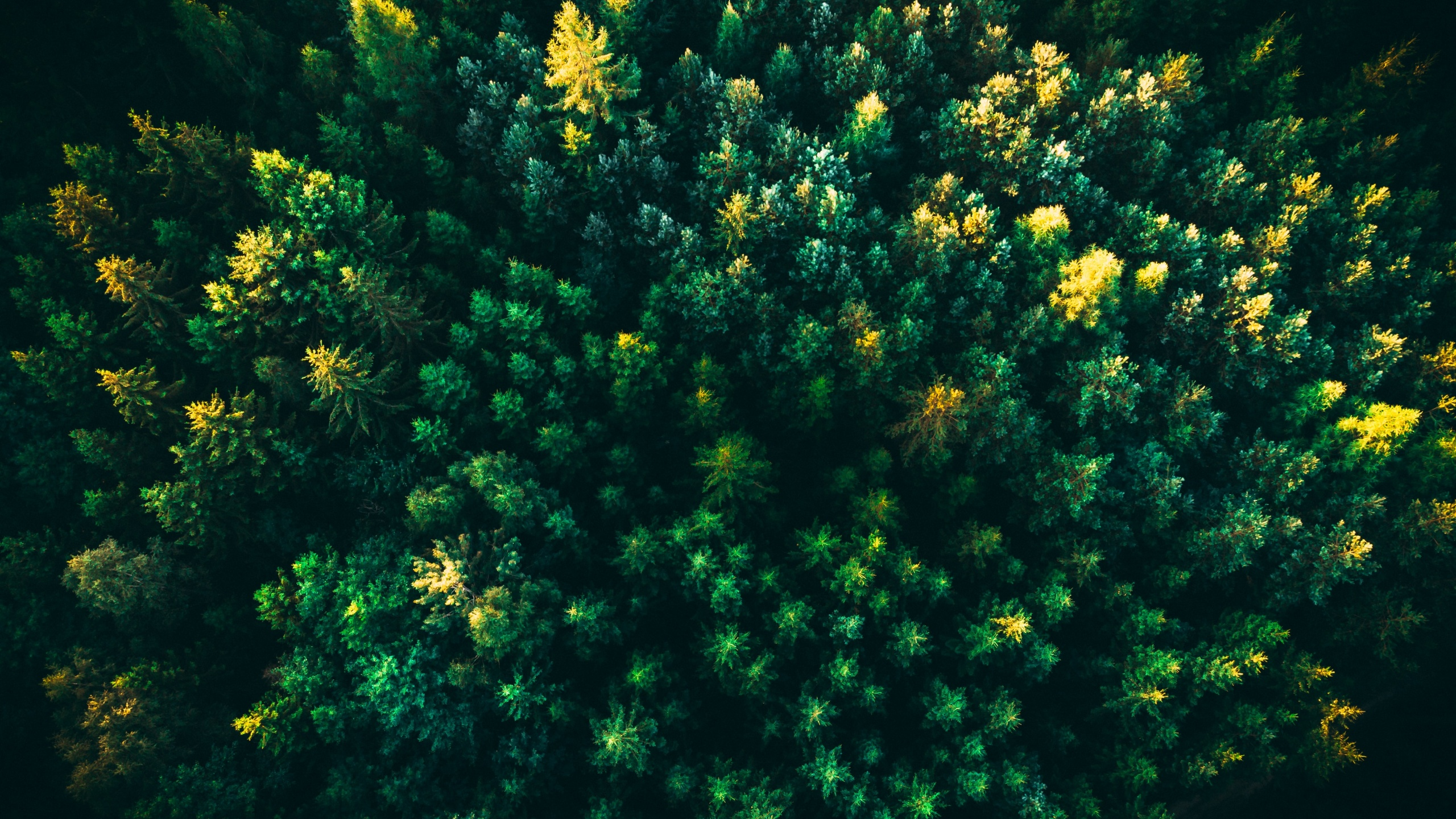 Green Trees 4k Wallpaper Forest Aerial View Greenery Drone Photo Nature 2158