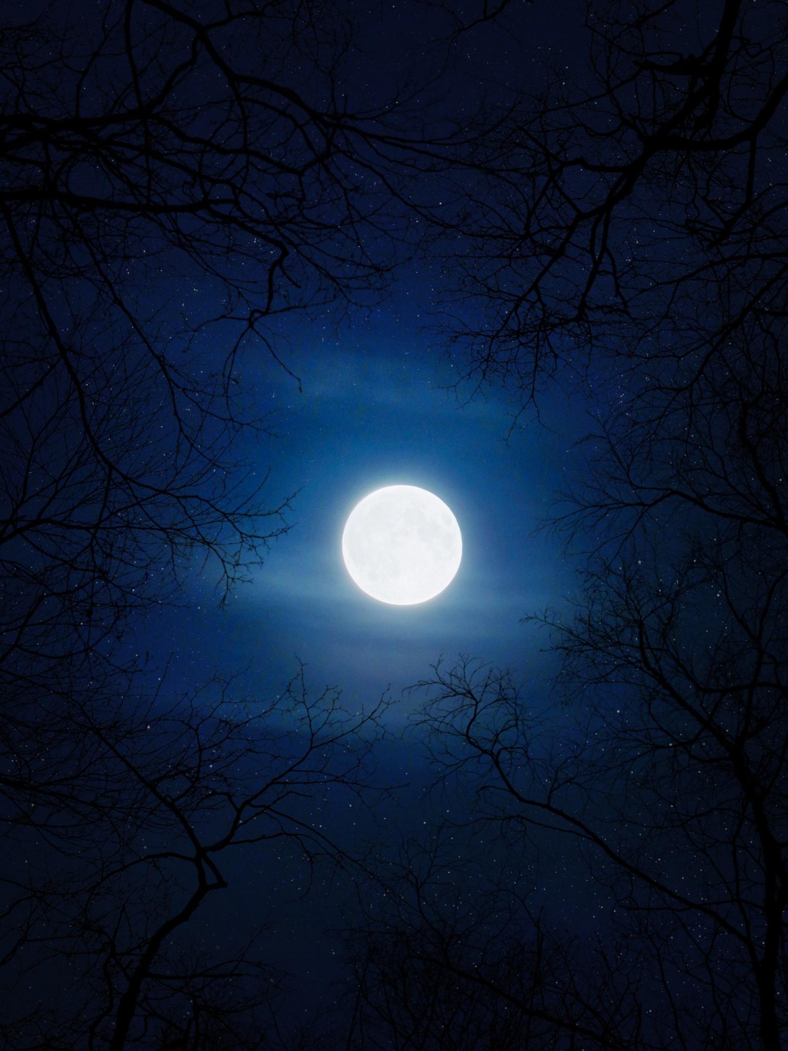 Moon 4k Wallpaper Night Cold Trees Blue Sky Full Moon Nature 1093