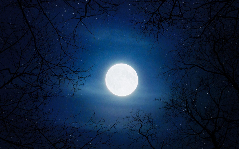 Moon 4k Wallpaper Night Cold Trees Blue Sky Full Moon