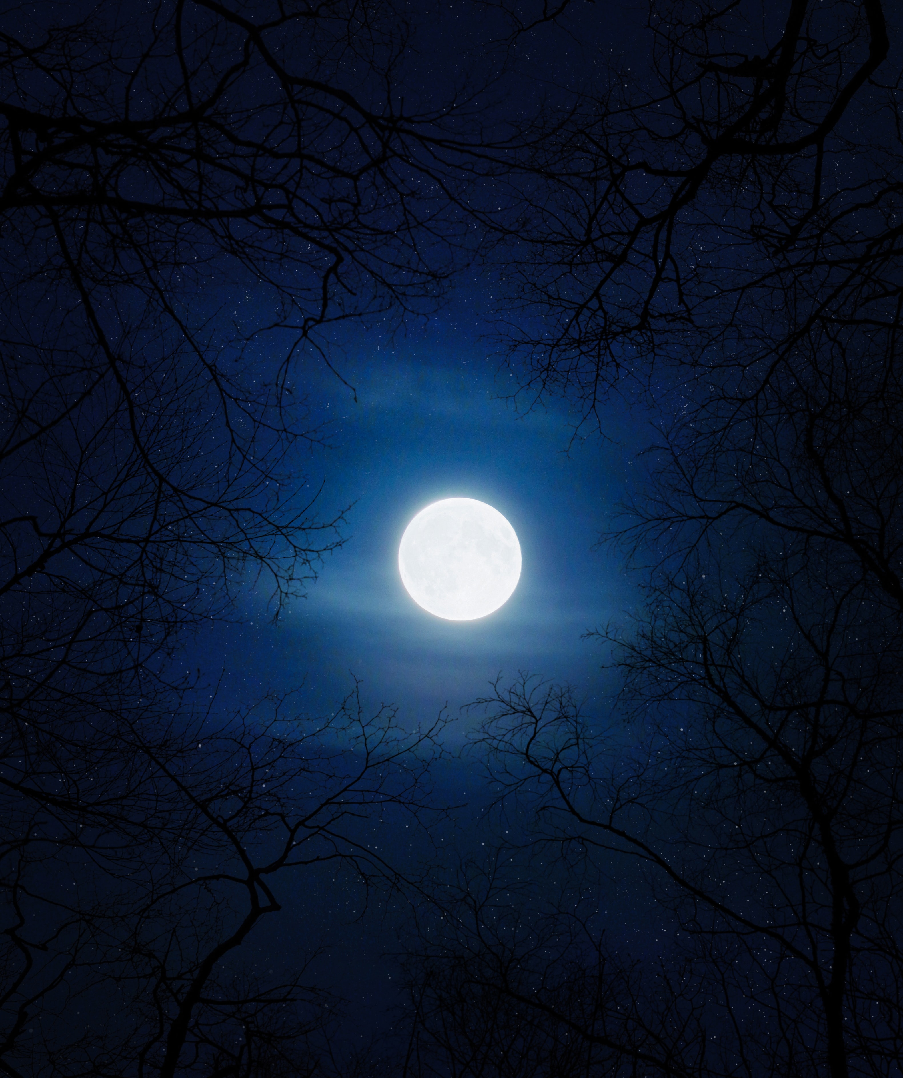Moon 4k Wallpaper Night Cold Trees Blue Sky Full Moon Nature 1093