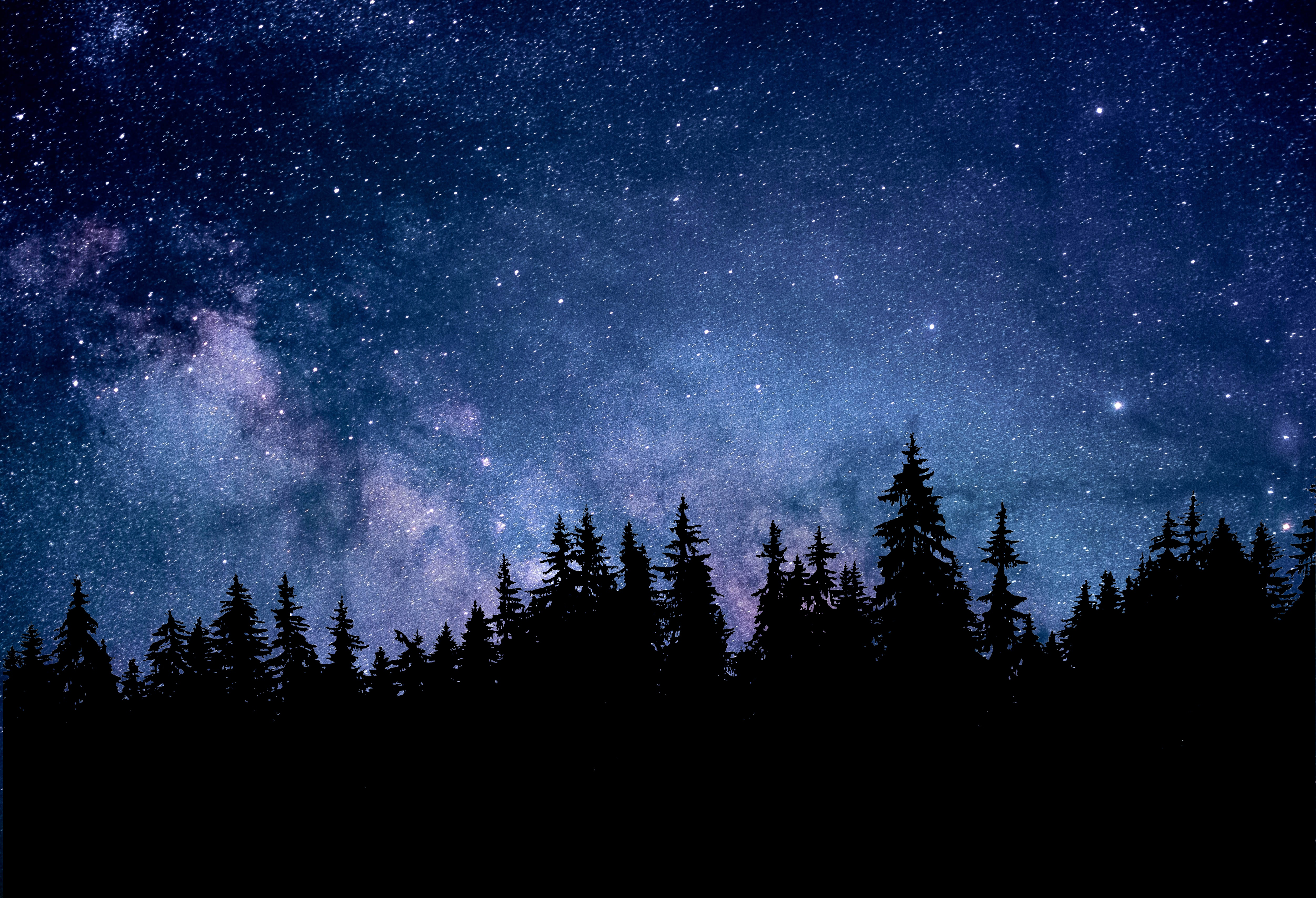 Night 4k Wallpaper Starry Sky Forest Silhouette Astronomy Cosmos 5k Nature 1679