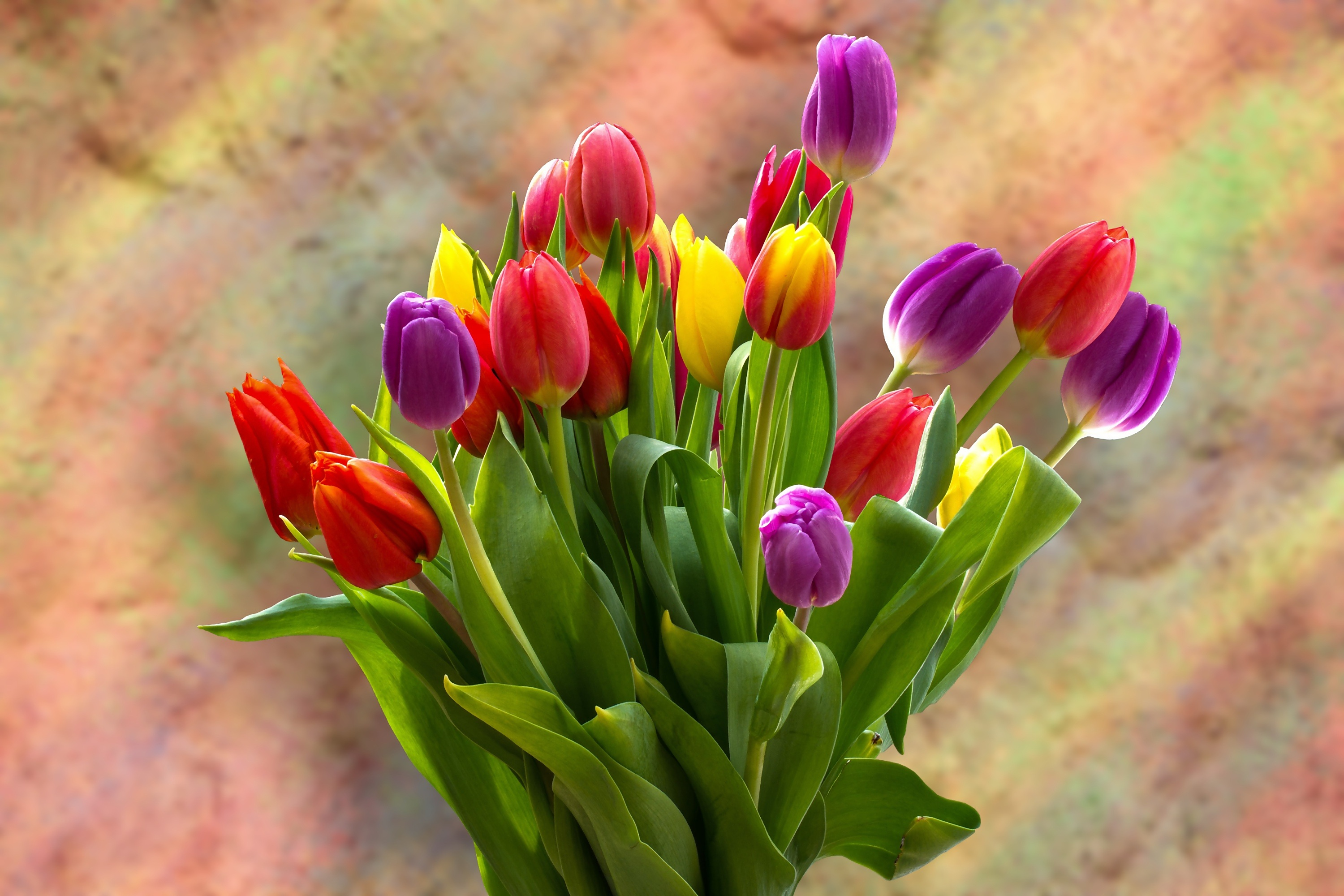 Tulip Bouquet 4k Wallpaper Spring Flowers Tulips Blossom Bloom Bright Green Leaves Red Yellow Flowers 2664