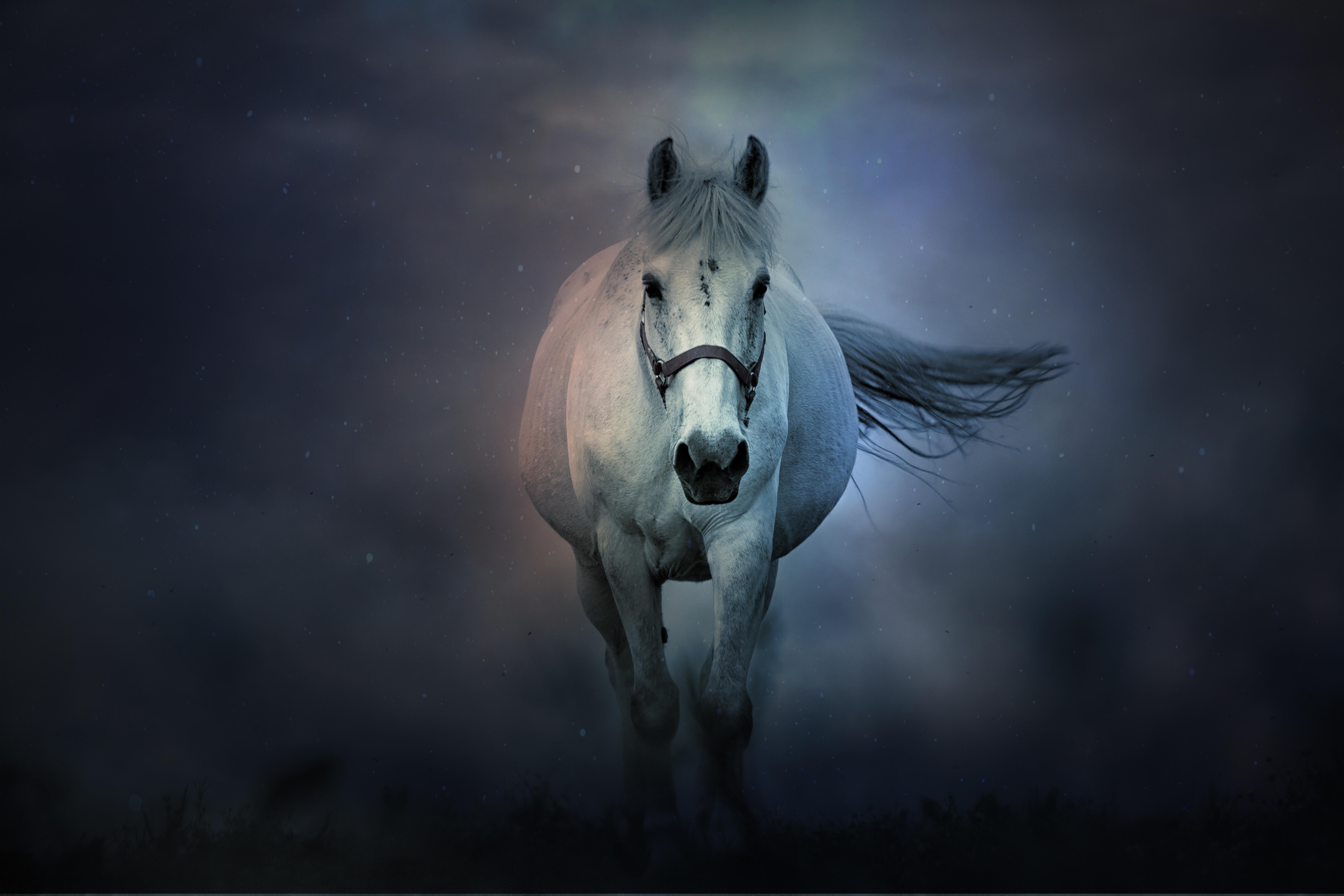 White Horse 4k Wallpaper Running Horse Dark Background 5k 8k Animals 2421