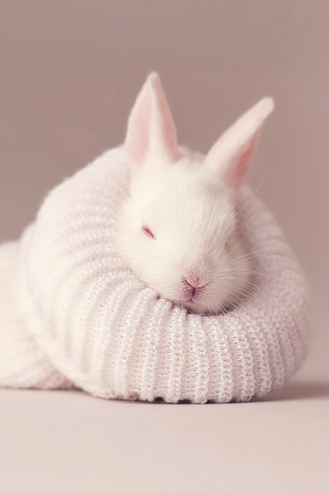 White Rabbit 4k Wallpaper Newborn Baby Bunny Sock Cute Bunny Animals 444