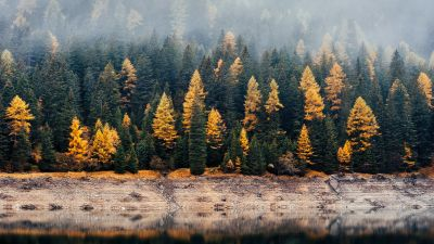 Forest, Woods, Autumn, Lake, Foggy, Mist, Fall, Reflection, 5K