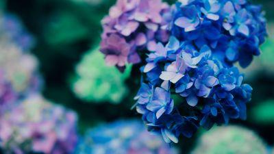 Purple Flowers, Blossom, Plant, Macro, 5K, 8K
