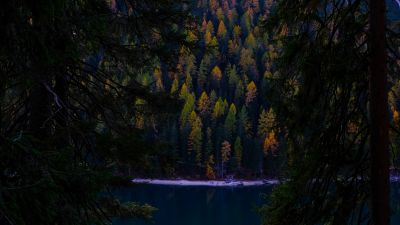 Lake, Forest, Wilderness, Pine trees, Cold, Evening