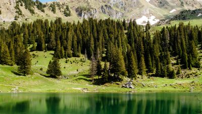 Gantrischseeli lake, Pine trees, Spring, Reflection, Mountain, Peak, Switzerland