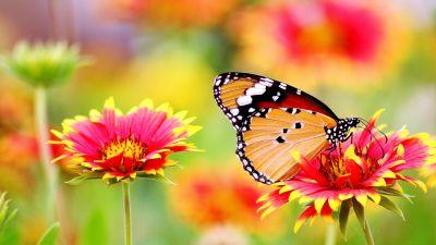 Butterfly, Pollen, Flower garden, Bokeh, Bloom, Blossom, 5K
