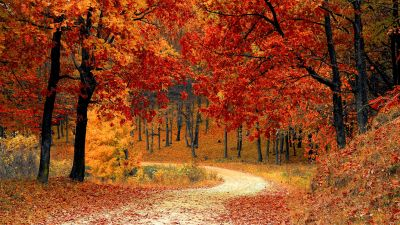 Autumn, Red leaves, Forest, Pathway, Scenery, Fall, Trees, Aesthetic
