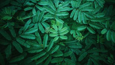 Leaves, Green, Spring, 5K