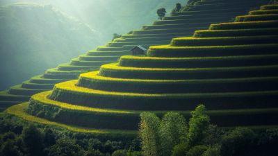 Rice fields, Agriculture, Paddy fields, Landscape, Terrace farming, Green, Daylight, 5K, 8K