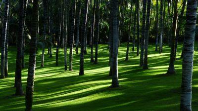 Green Grass, Trees, Woods, Daylight, Forest, Landscape