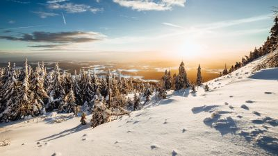 Winter, Landscape, Pine trees, Frosted trees, Sunny day, Snow, 5K