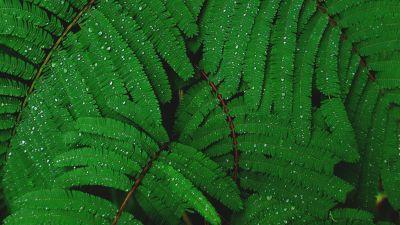 Plant, Leaves, Branches, Rain droplets, Dew Drops, Rain drops, Green, 5K