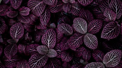 Purple leaves, Plant, Floral, Pattern