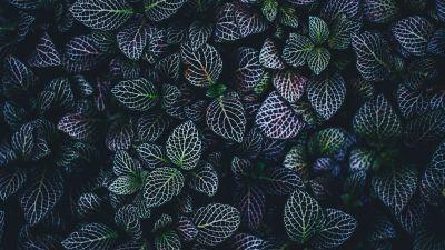 Leaves, Plant, Botanical garden, Pattern