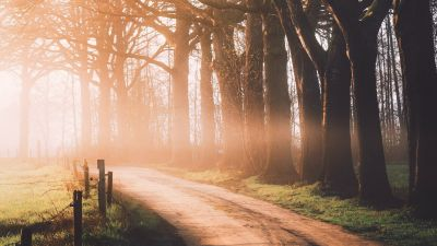 Autumn, Dirt road, Sunlight, Morning, Foggy, Forest, Path