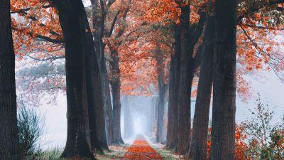 Autumn, Trees, Path, Foggy, Morning, Foliage, Fallen Leaves, 5K