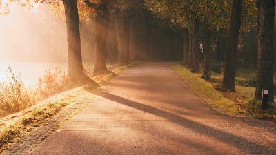 Autumn, Sunlight, Sun rays, Foggy, Morning, Road, Sunrise, Trees