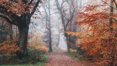 Autumn, Forest, Fall Foliage, Trees, Foggy, Morning, 5K, 8K