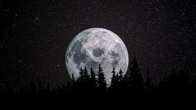 Full moon, Forest, Night, Dark, Starry sky, 5K, 8K