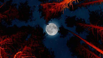 Full moon, Trees, Sky view, Night, Campfire, Outdoor, Woods, Dark