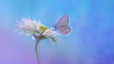 Butterfly, Gradient background, White flower