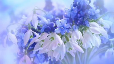 Blue flowers, Hyacinth, White, Blossom, Nature