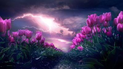 Pink flowers, Path, Thunderstorm, Dark Sky, 5K