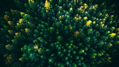 Green Trees, Forest, Aerial view, Greenery, Drone photo