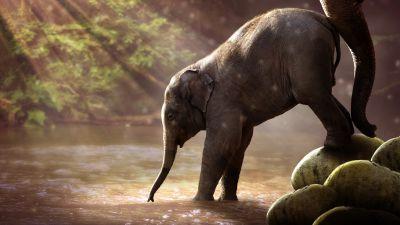 Elephant cub, Rocks, River, Sun rays, Waterhole, Daytime, Mammal, Cute, 5K, 8K