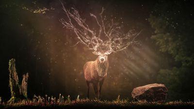 Hirsch, Deer, Forest, Sun rays, Dark background, Wildlife, Rock, 5K, 8K