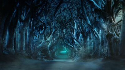 Avenue, Trees, Moonlight, Blue, Woods, Forest path, Road, Landscape
