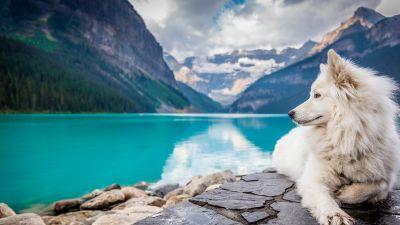 White Dog, Mountains, Lake Louise, Clouds, Pet, Water, Blue, 5K