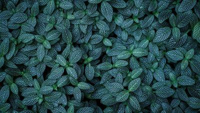Green leaves, Plants, Leaf Background, Pattern, Closeup, Aesthetic, 5K