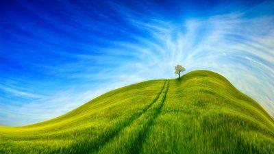 Grass Landscape, Blue Sky, Tree, Clear sky, Beautiful, Scenery, Daytime, 5K, 8K