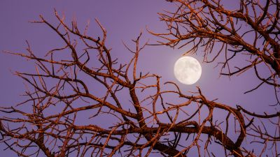 Twilight Moon, Night, Tree Branches, Sky view, 5K