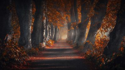 Pathway, Forest, Autumn leaves, Trees, Woods, Sun rays, Trunk